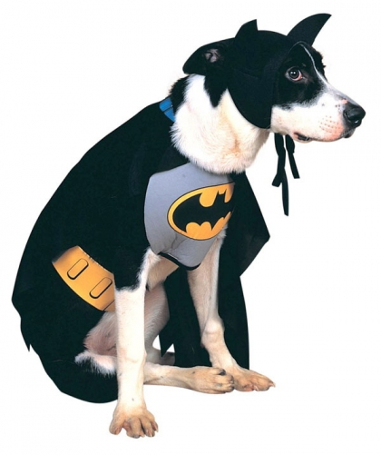 Dog in batman costume